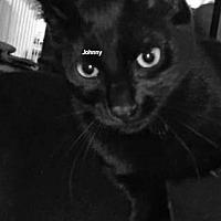 Adopt A Pet :: Johnny - Columbus, OH