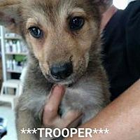 Adopt A Pet :: Trooper - Freeport, FL