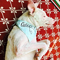 Adopt A Pet :: Sampson - Defiance, OH