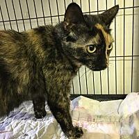 Adopt A Pet :: Pongo - Bourbonnais, IL