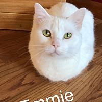 Adopt A Pet :: Emmie MKK - Albany, NY