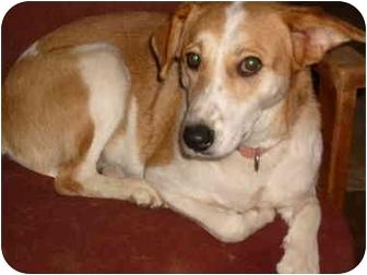 Collie/Border Collie Mix Dog for adoption in Anton, Texas - Allie