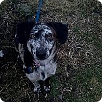 Adopt A Pet :: Maih - McKeesport, PA