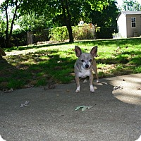 Adopt A Pet :: Frankie - Mt Gretna, PA