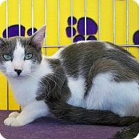Adopt A Pet :: Mableleln M - Sacramento, CA