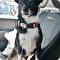 Adopt A Pet :: Lucy - Brooklyn, NY