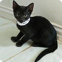 Adopt A Pet :: Count de Toes - The Colony, TX