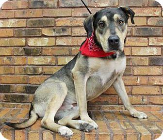 Shepherd (Unknown Type)/Shar Pei Mix Dog for adoption in Benbrook, Texas - Jimmy