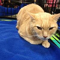 Adopt A Pet :: Chester - Jenkintown, PA
