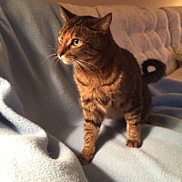 Adopt A Pet :: Ryvver - Chaska, MN