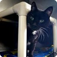 Adopt A Pet :: Picasso - New Milford, CT