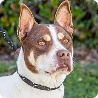 Adopt A Pet :: Vuori - San Diego, CA