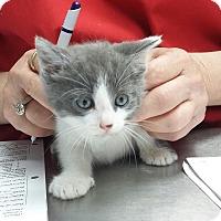 Adopt A Pet :: Jelly - Paducah, KY