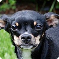 Adopt A Pet :: Cassie - Portola, CA