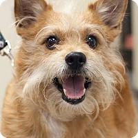 Adopt A Pet :: Carson - Bellbrook, OH