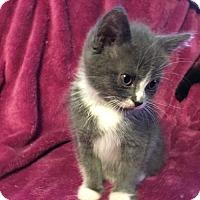 Adopt A Pet :: Emma - Taylor, MI