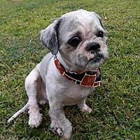 Adopt A Pet :: LaPorte - Houston, TX