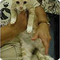 Adopt A Pet :: Puddie - Clementon, NJ