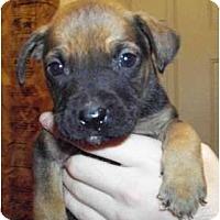 Adopt A Pet :: Deacon - Claypool, IN