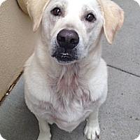 Adopt A Pet :: Newton - Salem, NH