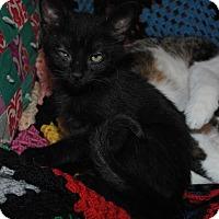 Adopt A Pet :: Sherman - Monroe, NC