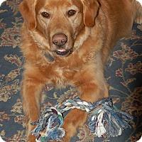 Adopt A Pet :: Dallas - St Louis, MO