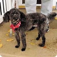 Adopt A Pet :: Ghetti - Ogden, UT