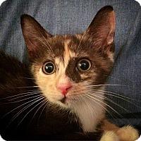 Adopt A Pet :: Patty - Brooklyn, NY
