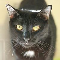 Adopt A Pet :: Kipling - Canoga Park, CA