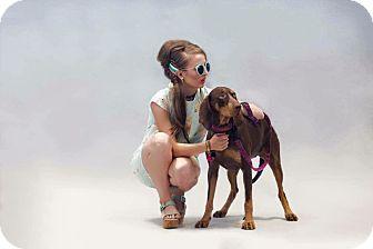 Hound (Unknown Type)/Coonhound Mix Dog for adoption in Ottawa, Ontario - Lucy