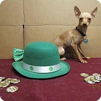Adopt A Pet :: Tico - Shawnee Mission, KS
