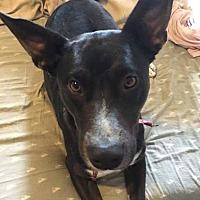 Adopt A Pet :: Bella - Newport, MI
