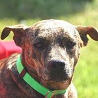 Adopt A Pet :: Ty - Wharton, TX