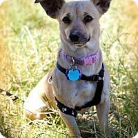 Adopt A Pet :: Emma - Milpitas, CA