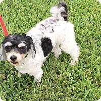 Adopt A Pet :: Travis - Naples, FL