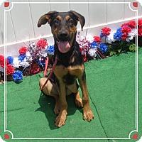 Adopt A Pet :: WRIGLEY - Marietta, GA