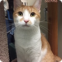 Adopt A Pet :: SACHMO - Cliffside Park, NJ