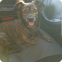 Adopt A Pet :: Marley, owner homeless, help - Corona, CA