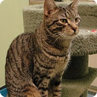 Adopt A Pet :: VISA - Ocala, FL