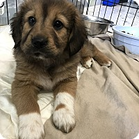 Adopt A Pet :: Heidi - Bryson City, NC