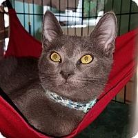 Adopt A Pet :: Rupert - Pasadena, CA