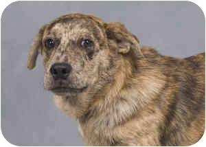 Shar Pei/Pug Mix Dog for adoption in Collinsville, Oklahoma - Teddy