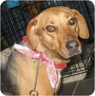 Black and Tan Coonhound Mix Dog for adoption in Richmond, Virginia - Savannah