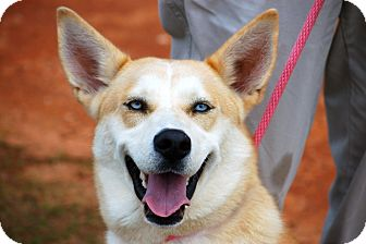 German Shepherd Dog/Husky Mix Dog for adoption in Preston, Connecticut - Mariah