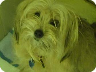 Terrier (Unknown Type, Small) Mix Dog for adoption in Philadelphia, Pennsylvania - Cecilia