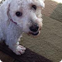 Adopt A Pet :: BUDDY - W. Warwick, RI