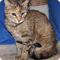 Adopt A Pet :: Sally - Colorado Springs, CO