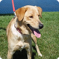 Adopt A Pet :: Bamboo - Lewisville, IN