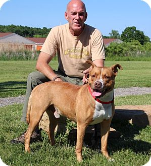 American Pit Bull Terrier Mix Dog for adoption in Elyria, Ohio - D.Q.-Prison Graduate