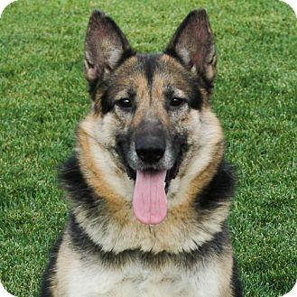 Shepherd (Unknown Type) Mix Dog for adoption in Stockton, California - Heidi